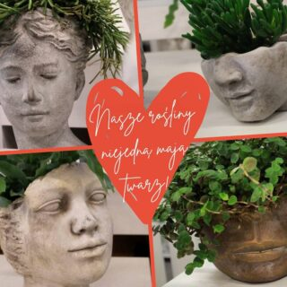 Którą twarz wybierasz? #twarz #twarze #face #doniczka #doniczki #ceramika #beton #doniczkiceramiczne #doniczkibetonowe #ozdoba #ozdobne #rosliny #roslinyzielone #kwiatysapiekne #kaktus #kaktusy #kwiatydoniczkowe #dom #rośliny #roslinydoniczkowe #kwiaty #kwiatysąpiękne #flowers #kwiatysztuczne