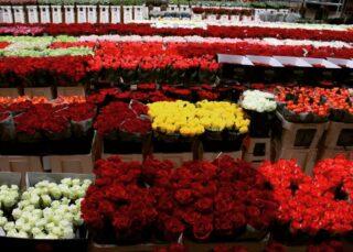 Kolorowego dnia życzymy 🤗☺️ #kolory #kolorowo #roze #roza #roses #kwiaty #kochamykwiaty #flowers #florysta #hurtowniaflorystyczna #bukiet #flowersarebeautiful #niceday #milegodnia #roses #róża #róże #swiebodzice #swidnica #walbrzych #strzegom #dzierżoniów