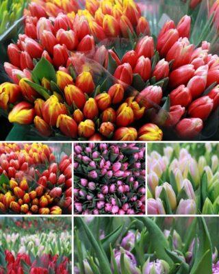 Komu odrobiny wiosny? 🤩🌷🌷🌷🌷🌷 #wiosna #tulips #tulipany #kwiatycięte #kwiatyswiebodzice #kochamykwiaty #kwiatycięte #kwiatysapiekne #kwiatysąpiękne #hurtowniaflorystyczna #flowersarebeautiful #flowers #flowerstagram #dzienbabci #dziendziadka #dzienbabciidziadka #kolory #kolorowo #flowers #wiosennekwiaty