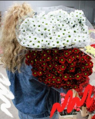 11 listopada 🇵🇱 #11listopada #polska #poland #bialoczerwoni #białoczerwoni #bialoczerwone #niepodległość #niepodległa #kwiaty #kwiatycięte #margaretki #margaretka #flowers #flowersarebeautiful #flowerstagram #florystyka #flowers🌸 #kwiatysąpiękne #kwiatysapiekne #kochamkwiaty #loveflowers